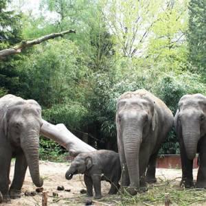 Van 10 t/m18 oktober: <br />'Maak van een mug een olifant' : boeiend herstvakantie-programma Natura Docet W.T.