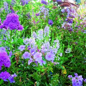 Open tuin in Deurningen