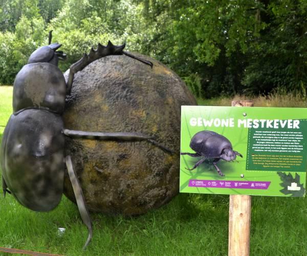 Uniek: in en rond Natura Docet Wonderryck Twente is het genieten van 'insectenplaag'