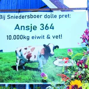 Een bijzondere prestatie van koe Ansje 364