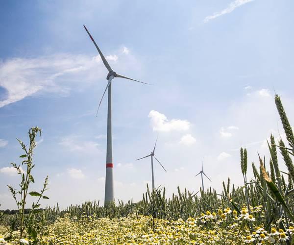 Gemeenten Dinkelland, Losser, Oldenzaal en Tubbergen willen ook windenergie