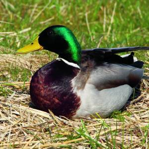 Natuurwandeling in het kader van 'Nationale Vogelweek'